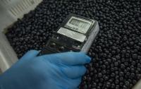 Сезон черники: сколько можно съесть ягоды, которая собирает радиацию