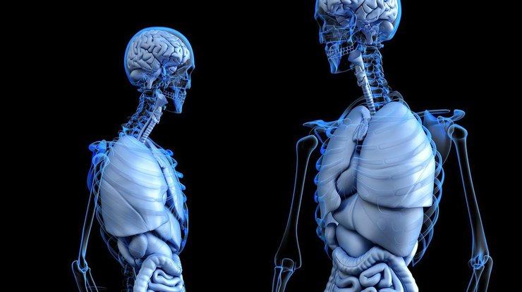 Без каких частей тела может жить человек