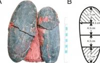 Палеонтологи обнаружили яйца динозавров голубого цвета