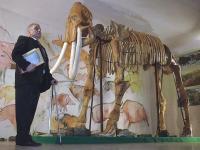 «Кости нашей мамонтихе мы «трансплантировали» от семи ее сородичей»