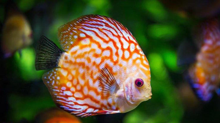 Рыба: какие виды могут навредить вашему здоровью
