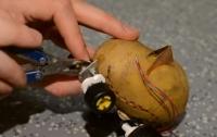 Инженер создал из картошки питомца, способного передвигаться (видео)