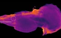 Ученые обнаружили область мозга, отвечающюю за уникальность каждого человека (видео)