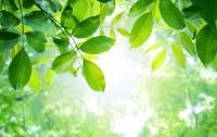Создан метод управления фотосинтезом, который поможет накормить мир