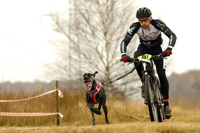 One man and his dog: Pole wins bikejoring world championship