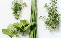 Як виглядає справжній крес-салат та інша корисна зелень