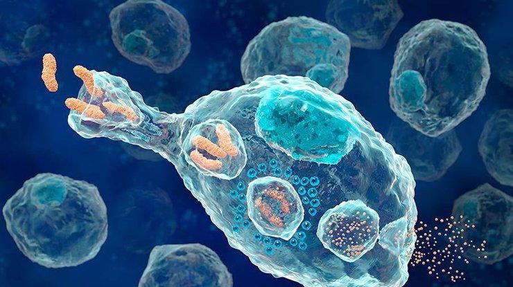 Сигнал смерти: ученые определили скорость гибели клеток