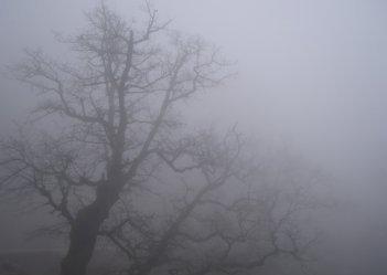 В ближайший час в Киеве ожидается туман, видимость 200-500 метров