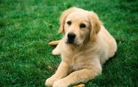Собаки используют мимику для общения с людьми – ученые