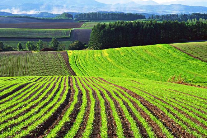 Земельный участок можно регистрировать онлайн по всей Украине