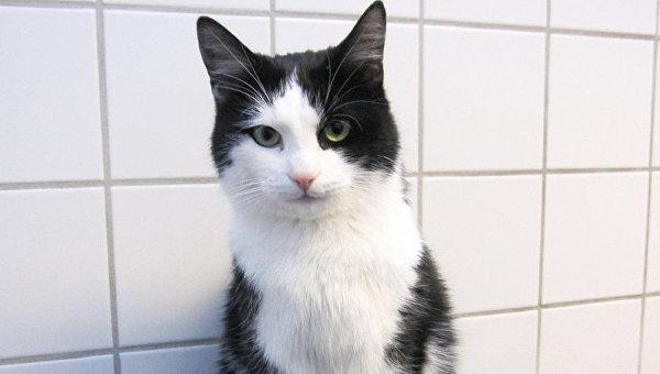 В Норвегии кот выжил после 40 минут вращения в стиральной машине