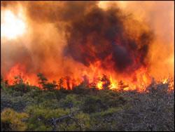 Кількість жертв лісових пожеж в Португалії перевищила40 осіб