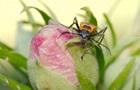 Ученые нашли гриб-паразит, который делает из жуков зомби