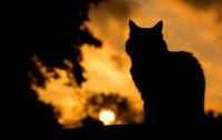 Как коты защищают хозяев от инфарктов