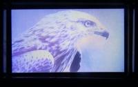 Компания Samsung разработала жидкокристаллический дисплей с рекордной разрешающей способностью