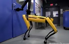 Стала відома дата продажів роботів-собак від Boston Dynamics