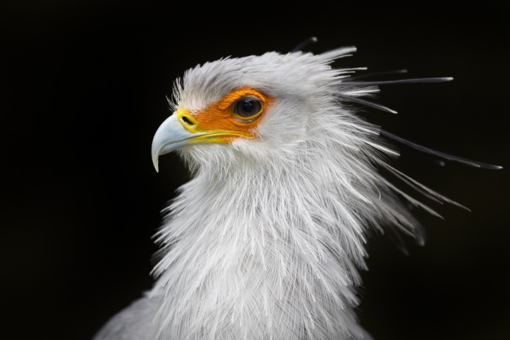 Polish egyptologist discovers unique depictions of secretary bird