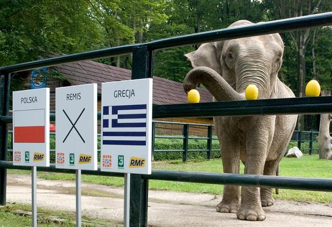 Football: Citta the elephant to predict Poland