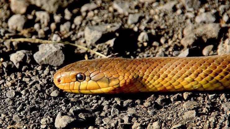 Во Львове от укуса змеи умер ребенок
