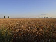 Большинство владельцев украинских агрохолдингов не живут в своей стране, отмечает автор
