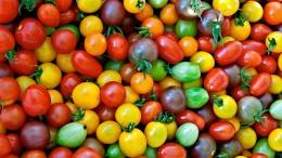 Украина в разы сократила экспорт помидоров
