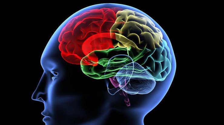 Медики назвали самый полезный продукт для головного мозга