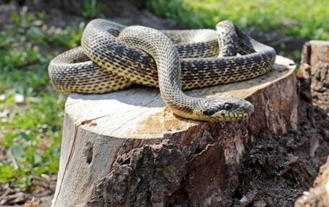 Во Львовской области 4 человек попали в реанимацию после укусов змей