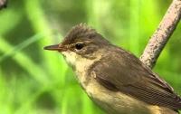 Ученые раскрыли тайну магнитного компаса птиц
