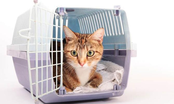 В Украине изменились правила на перевозку домашних животных