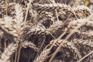 Украина собирает урожай: что будет с ценами на хлеб