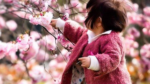 В Японии расцвели первые сакуры: сказочные фото