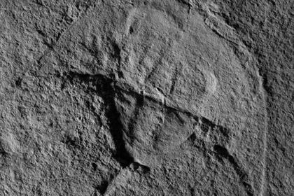 Палеонтологи обнаружили «Дарта Вейдера»