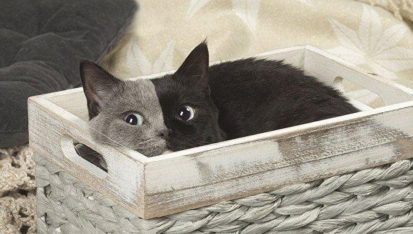 Кошка с удивительным окрасом поразила сеть