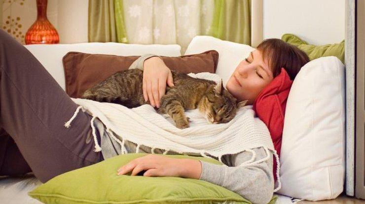 Коты могут лечить людей: список болезней