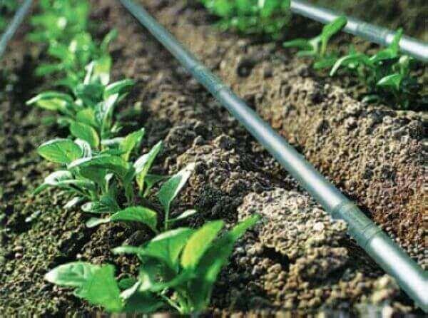 ФАО поставила 50 систем краплинного зрошення малим агрогосподарствам у Східній Україні