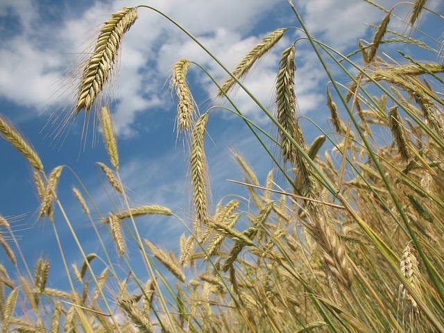 З окупованого Криму експортують зерно до Сирії
