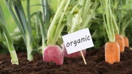 Датчане будут инвестировать в органическое производство Украины