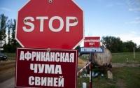 В Украине количество вспышек АЧС подходит к сотне