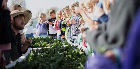 Брат Илона Маска разработал проект фермерства будущего