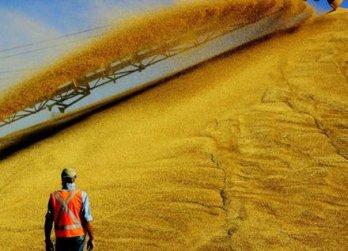 Мінсільгосп США підвищив прогноз експорту пшениці з України в 2017/2018 МР на 0,5 млн тонн