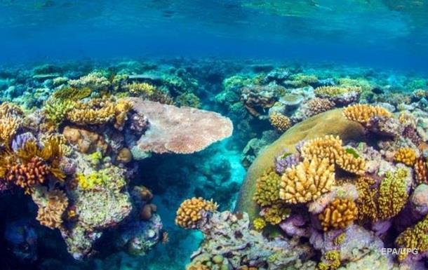 Експерти назвали вартість Великого Бар єрного рифу
