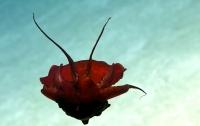 Ученые нашли в море загадочное существо (ВИДЕО)
