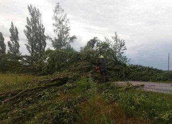 Буря свалила во Львове около двух десятков деревьев
