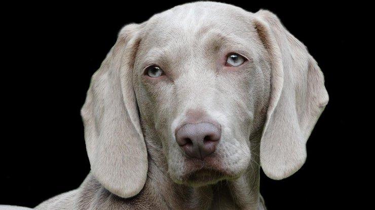 Ученые сделали неожиданное открытие об эмоциях собак