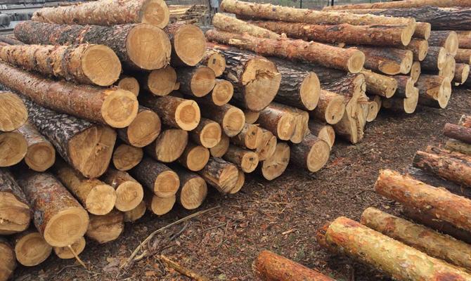 Данные Украины и ЕС по вывозу леса-кругляка разошлись в 250 раз