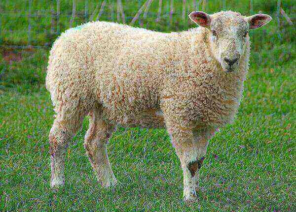 ДФС виявила замаскований під овечу ферму підземний спиртзавод