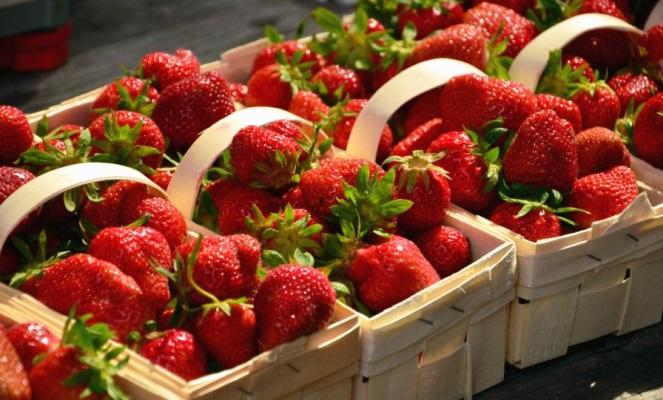 Personnel Service: Українці охоче їдуть до Польщі збирати полуницю