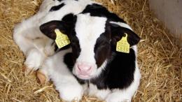Крупный производитель молока инвестировал $3,9 млн в модернизацию