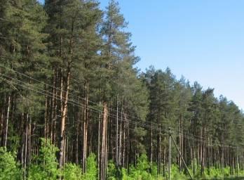 Порошенко доручив Кабміну розробити заходи для розвитку лісгоспу та збереження заповідників