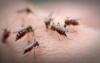 Стало известно, кого комары считают деликатесом